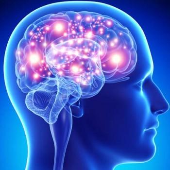 Cérebro Feliz